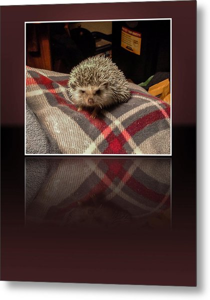 Hedgehog 5 Metal Print
