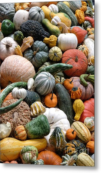 Heirloom Squash Tower V. Metal Print by Vinnie Oakes