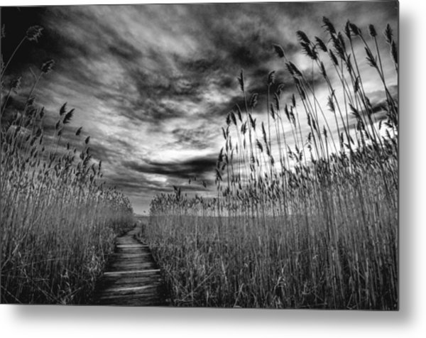 Metal Print featuring the photograph Hell Cat Swamp by Michael Hubley