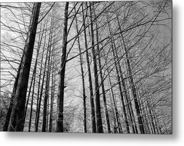 Hello Trees Metal Print by Phoresto Kim