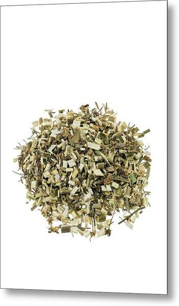 Hemlock Bark Herb Metal Print by Geoff Kidd/science Photo Library