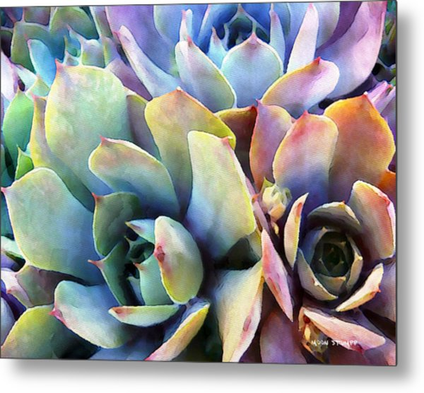 Hens And Chicks Series - Soft Tints Metal Print