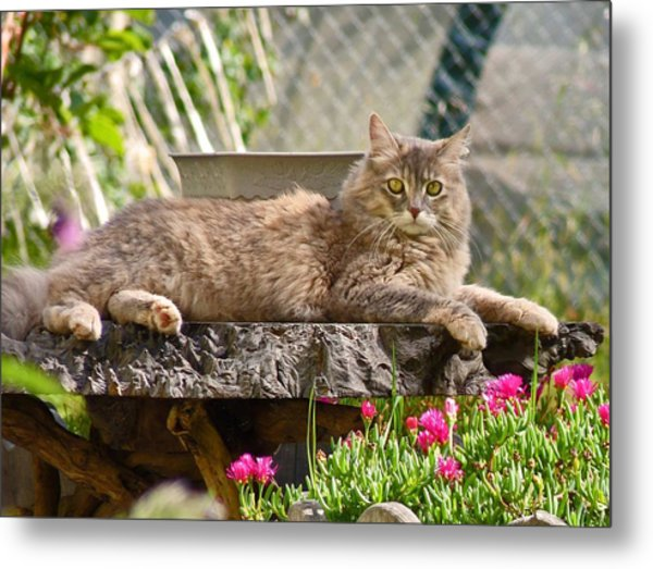 Her Highness  Metal Print