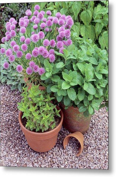 Herbs In Pots Metal Print