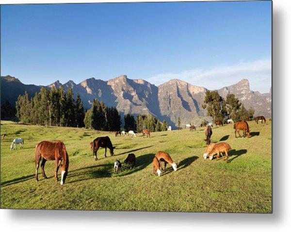 Herds Grazing Near The Village Metal Print
