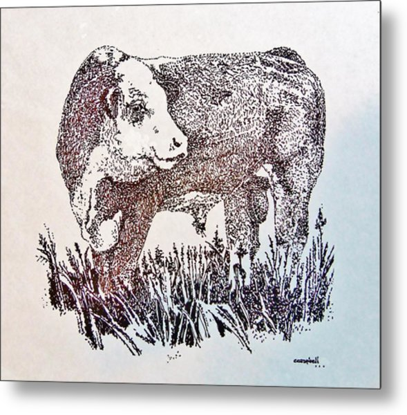 Polled Hereford Bull  Metal Print