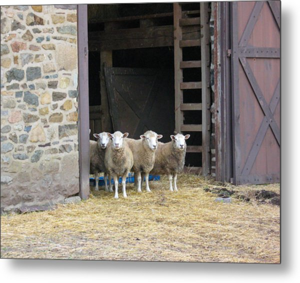 Here's Looking At Ewe Metal Print