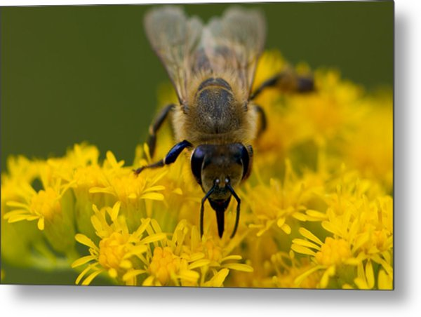Here's Looking At You Honey Metal Print by John Hoey