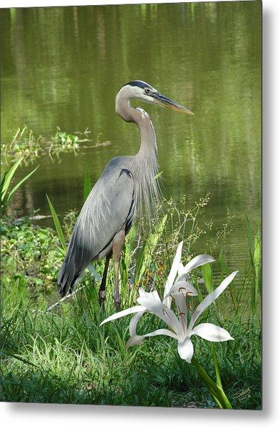Heron And Swamp Lily Metal Print