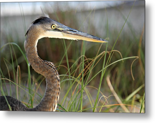 Heron In The Grass Metal Print