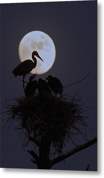Heron Nest With Full Moon Metal Print