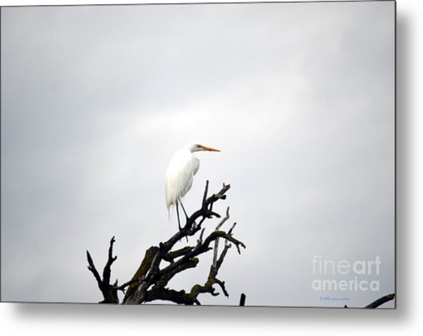 Heron On A Dead Tree Metal Print