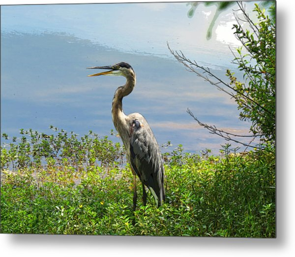 Heron On Lake Metal Print