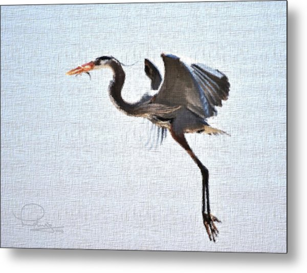 Heron With Catch Metal Print