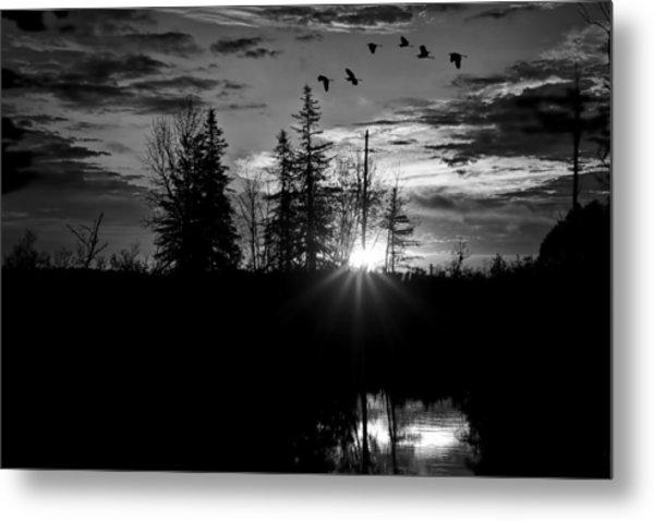 Herons In Flight - Black And White Metal Print