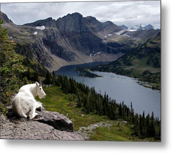 Hidden Lake Mountain Goat Metal Print by Robert Yone