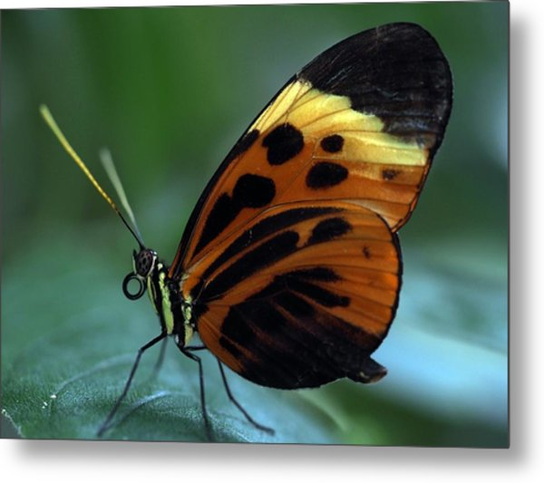 Hiding From The Sun Metal Print by Atchayot Rattanawan