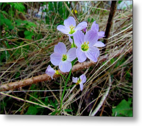 Hiding In The Undergrowth Metal Print