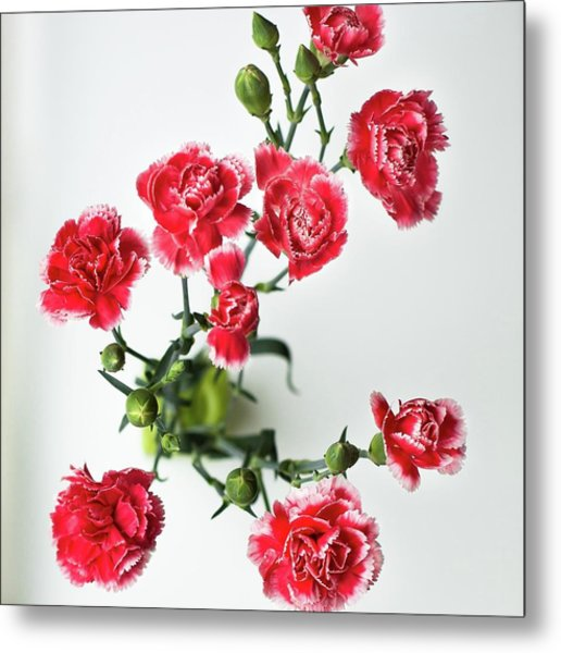 High Angle View Of Red Carnations Metal Print by Kateryna Kyslyak / Eyeem