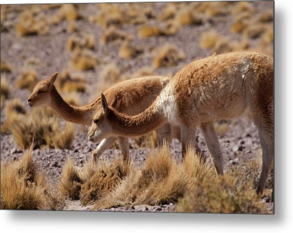 High In The Andes Mountains Metal Print