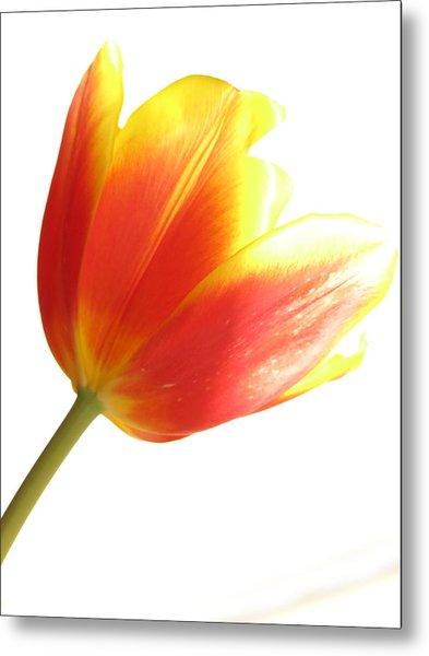 High-key Tulip Metal Print