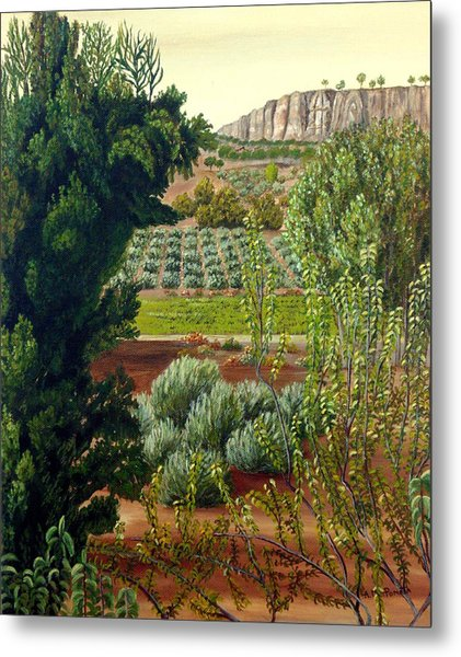 High Mountain Olive Trees  Metal Print