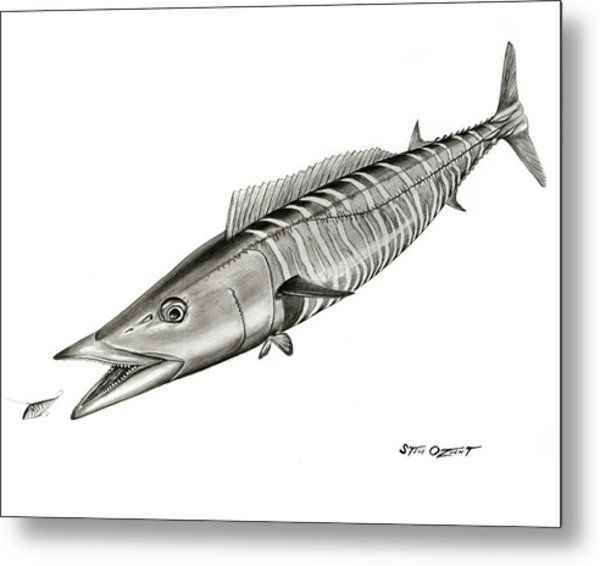 Metal Print featuring the drawing High Speed Wahoo by Steve Ozment
