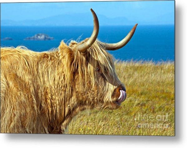 Highland Beauty Metal Print