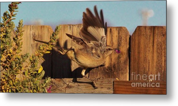Hightail It Out Of There Metal Print