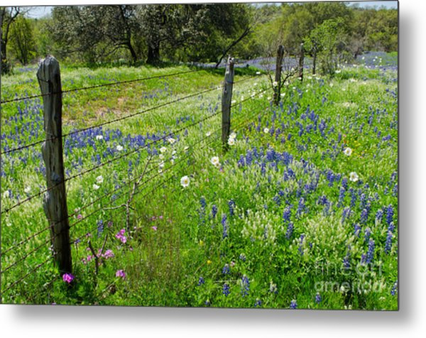 Hill Country Wildflowers Metal Print by Cathy Alba