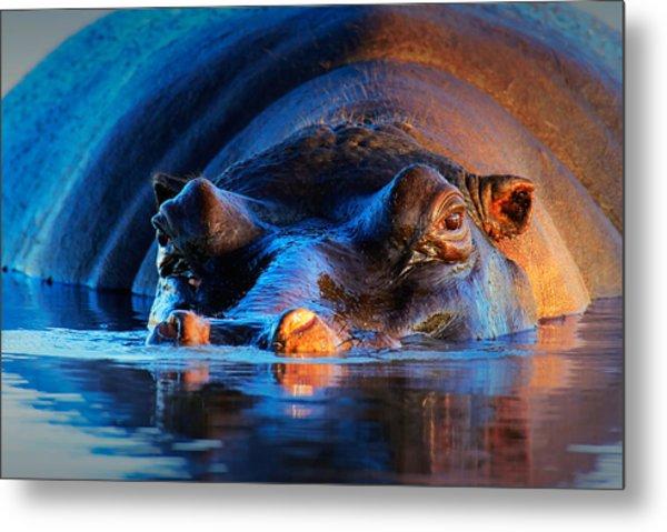 Hippopotamus  At Sunset Metal Print