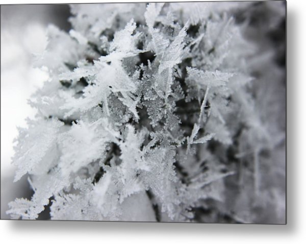 Hoar Frost In November Metal Print