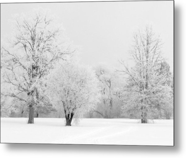 Hoar Frost Morning Metal Print by Rob Huntley