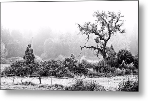 Hoar Frosted Island Metal Print