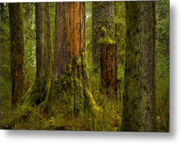 Hoh Rainforest 1 Metal Print