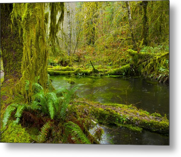 Hoh Rainforest 3 Metal Print