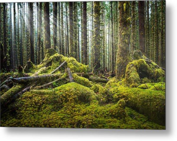 Hoh Rainforest Log Jam Metal Print