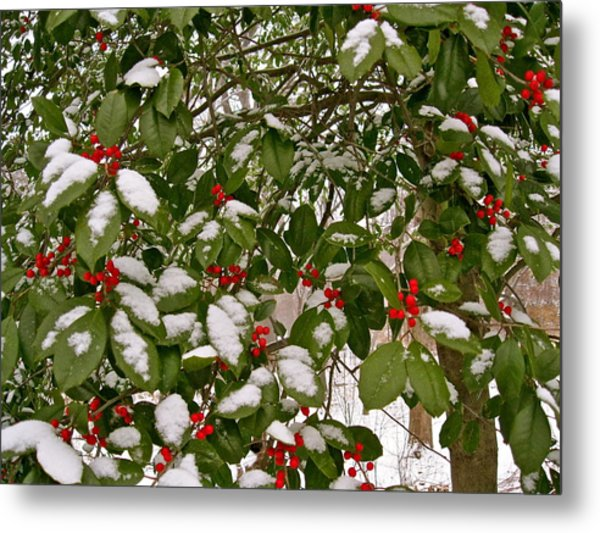 Holly - Winter Metal Print