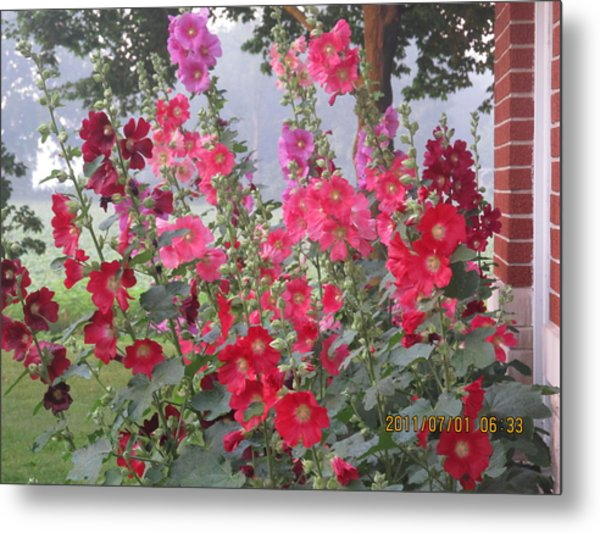 Hollyhocks Mix Metal Print