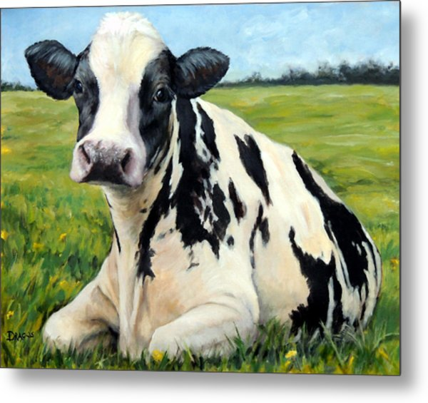 Holstein Cow Relaxing In Field Metal Print