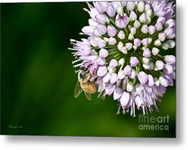 Honey Bee And Lavender Flower Metal Print