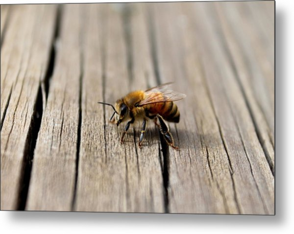 Honey Bee Beauty Shot Metal Print