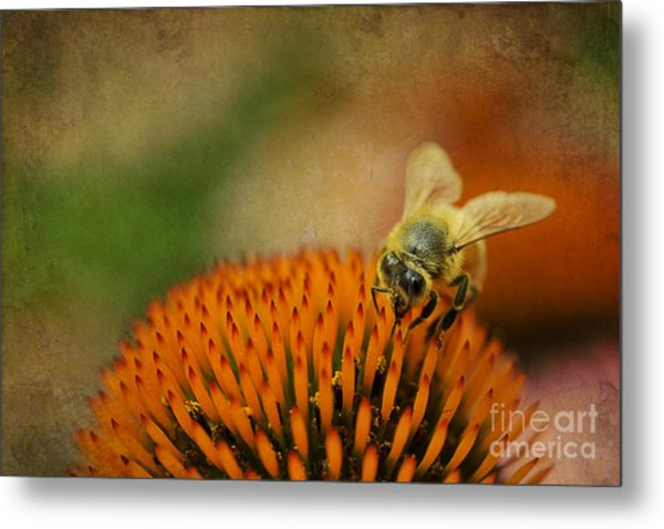Metal Print featuring the photograph Honey Bee On Flower by Dan Friend