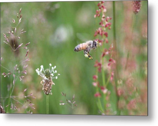 Honeybee Flying In A Meadow Metal Print