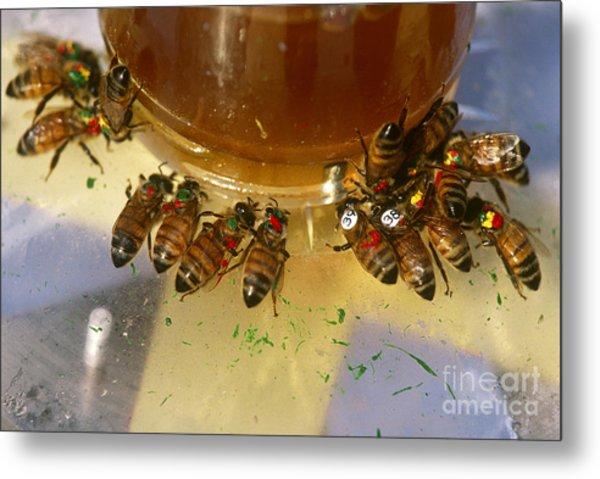 Honeybees Metal Print