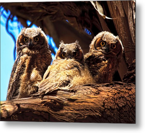 Hoo Are You Metal Print