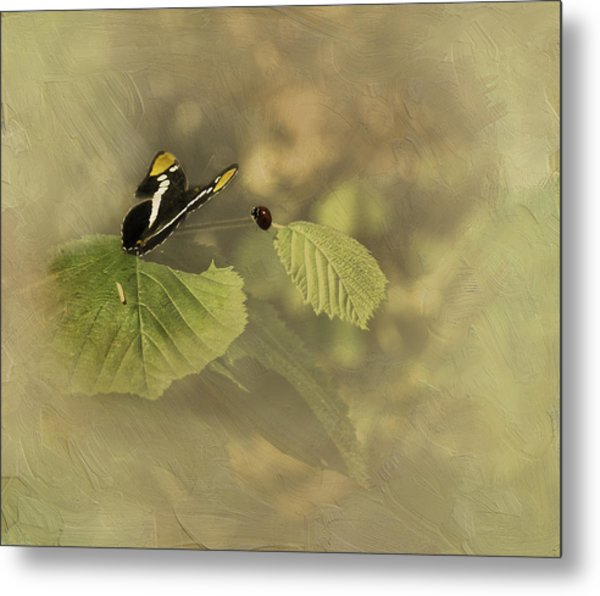 Hop On My Back My Lady And We Will Fly Far Far Away Metal Print