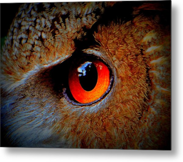 Horned Owl Eye Metal Print