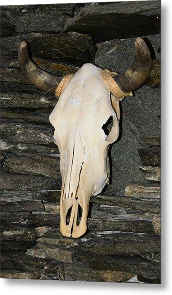 Horned Skull Metal Print by T C Brown