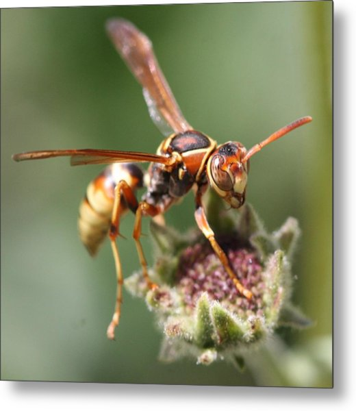 Hornet On Flower Metal Print